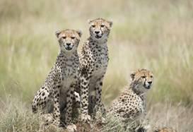 Safarirejser og natur