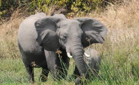 Afrika: Kilimanjaro, safari i Tanzania og Zanzibar