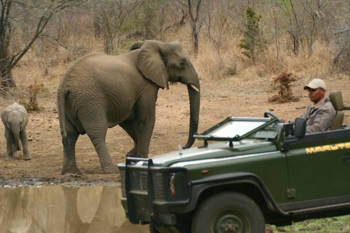 Makutsisafari-Sydafrika
