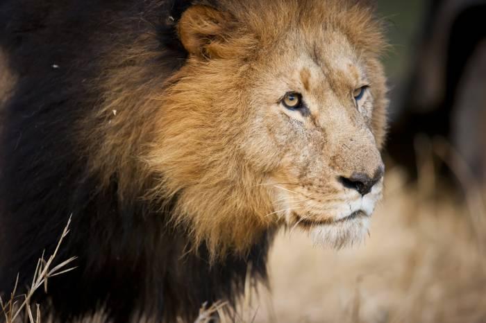 Safarirejse Kipling