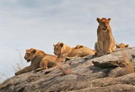 Safari rejser og natur