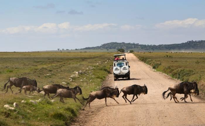 Tarangire safari rejse Tanzania