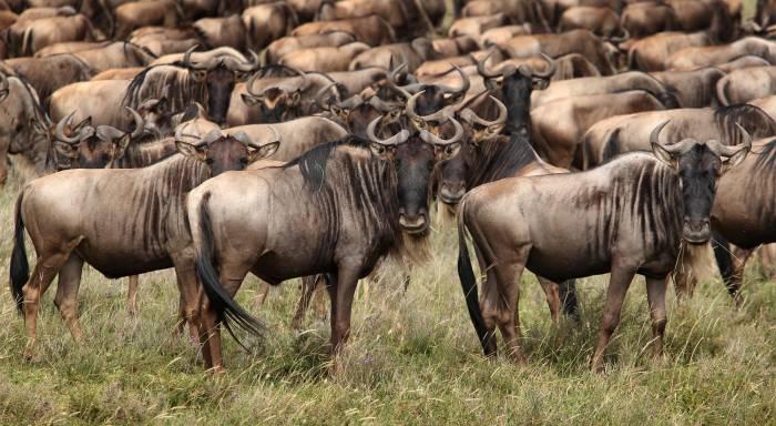Ngorongoro krateret safarirejse