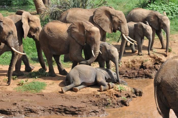 Over Naabi Plains til Ngorongoros højland