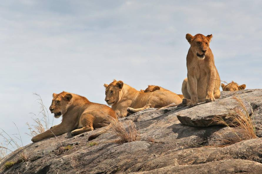 Safari i Tanzania og Zanzibars strande
