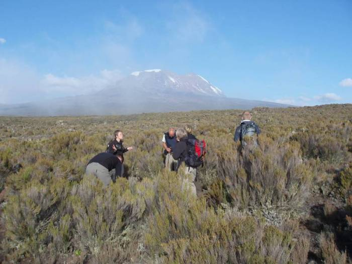 Kilimanjaro-rejse