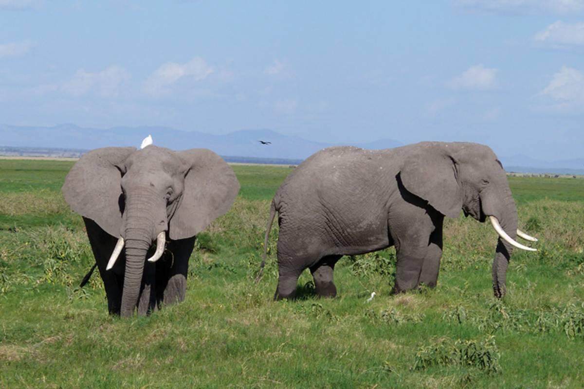 Safari Tanzania - Zanzibar