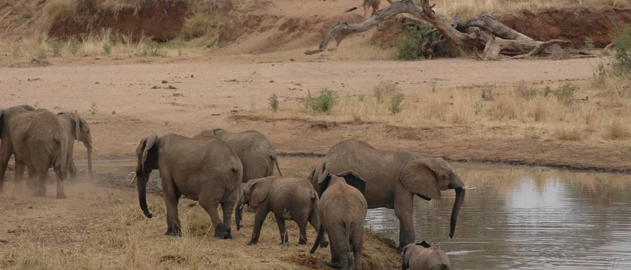 rejser afrika tanzania zanzibar tilbud safari og zanzibar