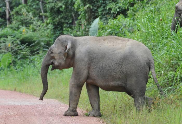 mt-kinabalu-4095meter-elefant
