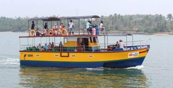 Hvalsafari-SriLanka