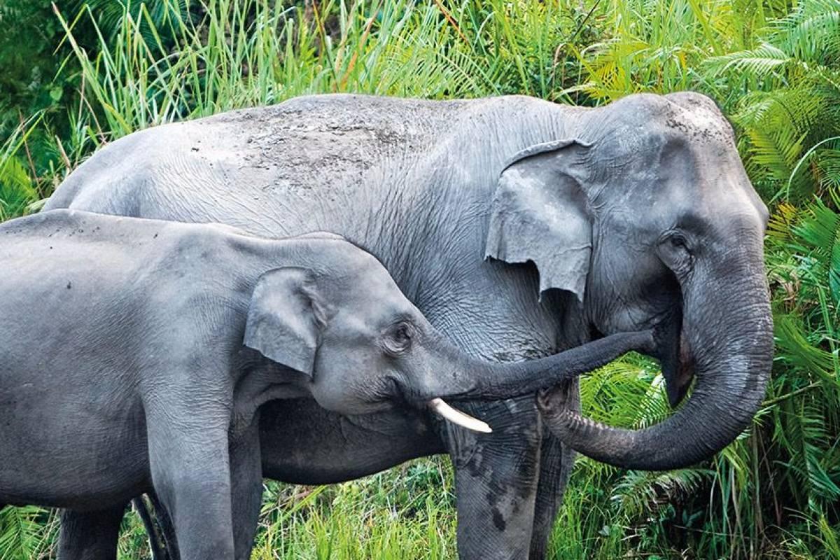 Sri Lanka tilbagemelding