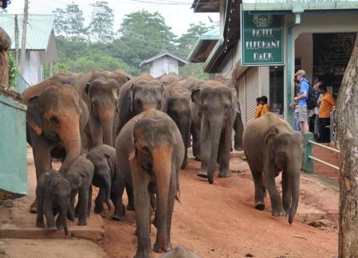Familie ferie Sri Lanka