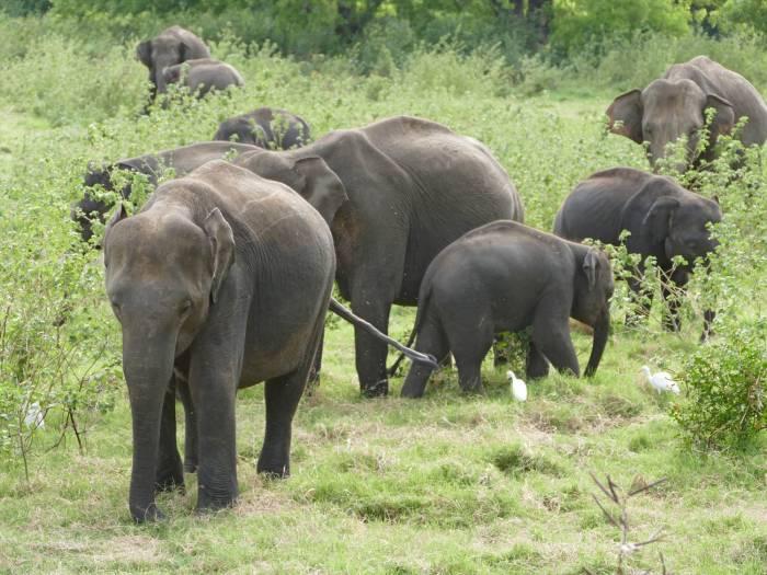 Temarker Sri Lanka