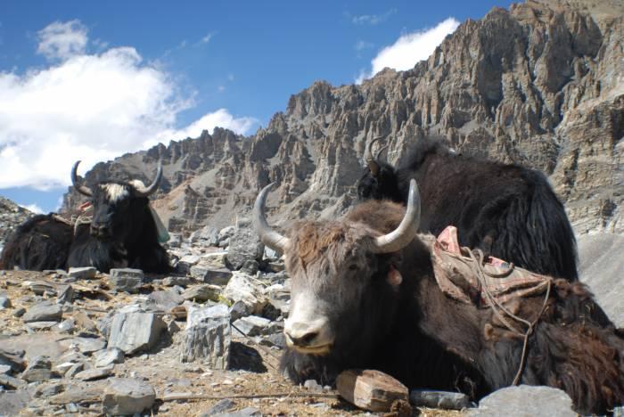 Lhasa-Kathmandu
