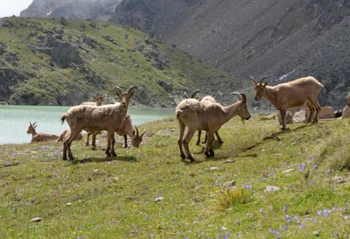 Irik-Valley-Elbrus