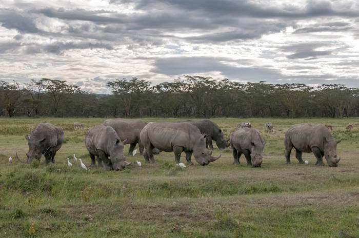 Afrika-safari rejse
