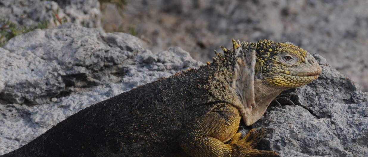 Rejser til Ecuador og Galapagos, vi er eksperter i Sydamerika