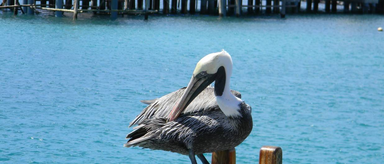 Kiplings Galapagos rejser - Galapagos krydstogt og øhop