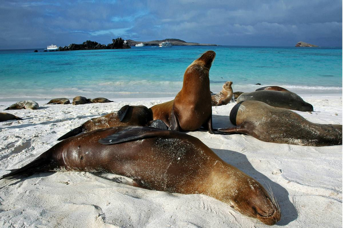Ecuador - Cuyabeno Lodge, ø-hop og 5 dages cruise på Galapagos.
