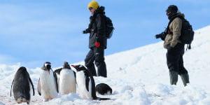 Kom helt tæt på pingvinerne på Petermann Island