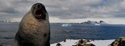 Oplev sæler på Antarktis