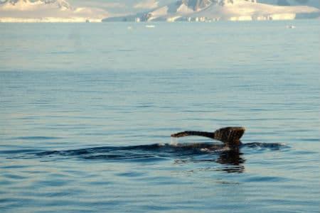 Selv sommeren i Antarktis er meget kold