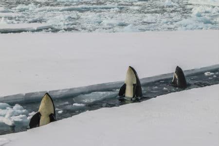 Vinteren på Antarktis er meget kold