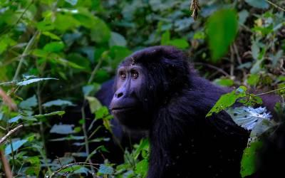 Læs mere om Uganda