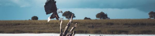 Oplev at sejle i Mokoro på din rejse til Botswana