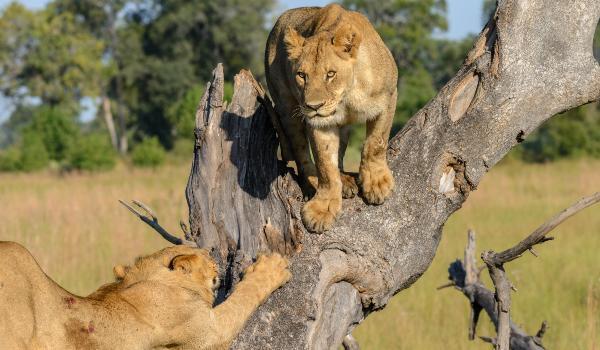 Oplev Okavango Delta på din rejse til Botswana