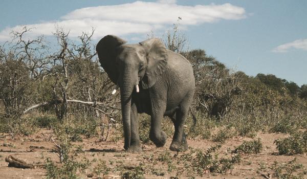 Oplev Chobe nationalpark på din rejse til Botswana