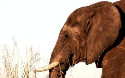 Rejs til Kasane i Botswana