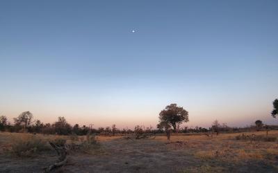 Rejs til Maun i Botswana