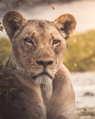 Find rejse til Botswana