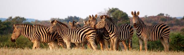 Tag på safari rejse i Botswana