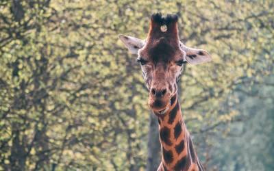 Rejs til Afrika og oplev de mange vilde dyr