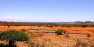 Savanne i Kenya ved Karen Blixen Campen