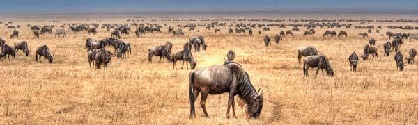 dyr ved Lake Nakuru i Kenya