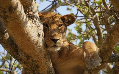 Dyr i Kenya