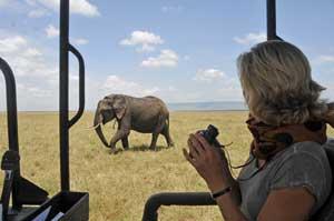 Safari Rejse Elefant