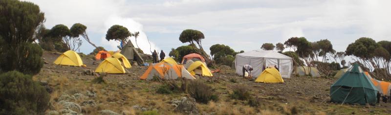 Trek Kilimanjaro