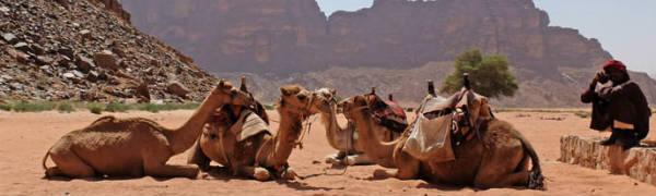 Tag på kameltrekking når du rejser til Marokko