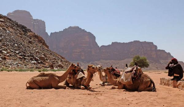 rid på kameler, når du rejser til Marokko