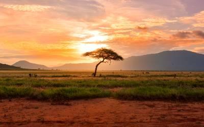 Oplev den smukke natur i Afrika