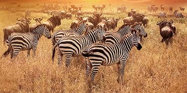 Kiplings rejser til Tanzania i Afrika