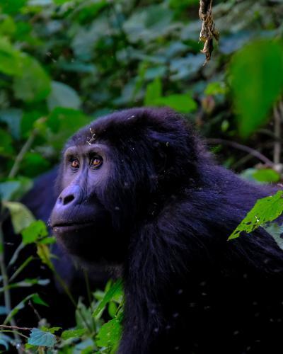 Find rejse til Uganda og Rwanda
