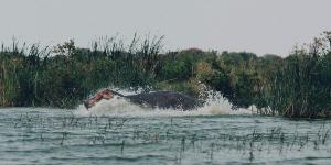 Oplev Victoriasøen på din rejse til Uganda og Rwanda