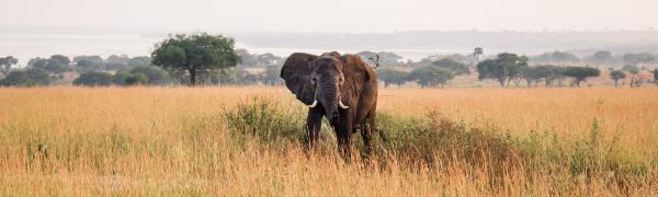 Find rejse med safari til Uganda og Rwanda