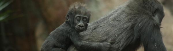 Find rejse med trekking til Uganda og Rwanda