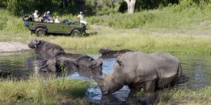 Sydafrika er bosted for rigtig mange næsehorn